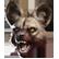 Far Cry Primal Emoticon fcp yena