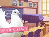 Hatoful Boyfriend - Sakuya Le Bel Shirogane