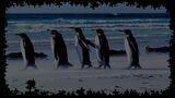 Pixel Puzzles 2 Birds Background King Penguins