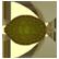 Orbit Emoticon enki