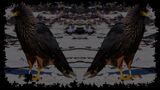 Pixel Puzzles 2 Birds Background Striated Caracaras