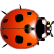 Reach for the Sun Emoticon ladybird