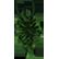 Pulstar Emoticon spiky