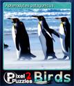 Pixel Puzzles 2 Birds Card 8