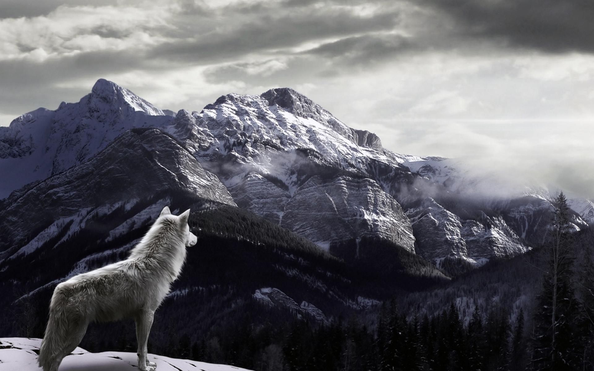 White Wolf Mountain Thorun Wiki Fandom