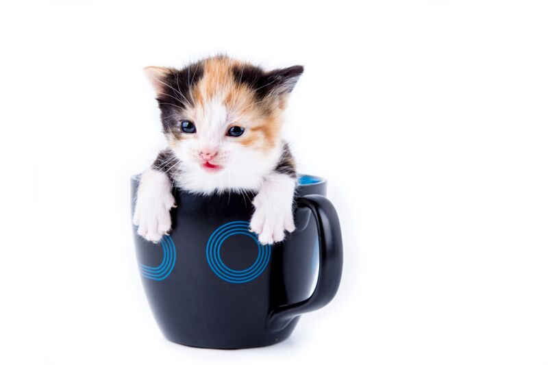 Cat-in-mug