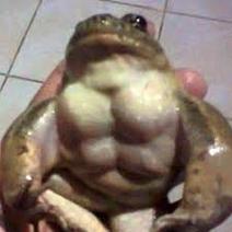 Swole frog