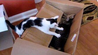 The Newegg Box - Astronocats