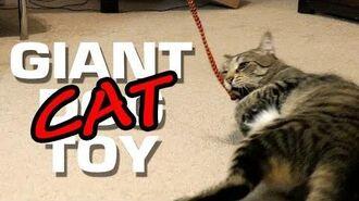 Giant Cat Toy • 2.8.18