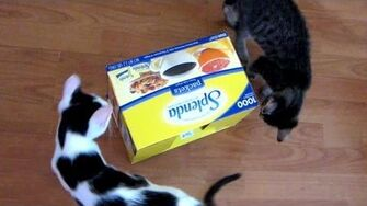 The Splenda Box - Astronocats