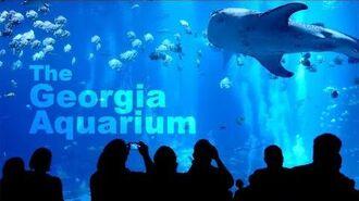 Museum of Fish • 9.15.18