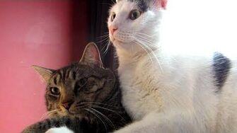 Sunny Cuddles - Astronocats