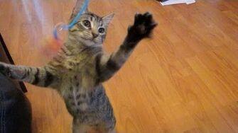 Bobblehead - Astronocats