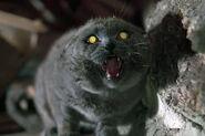 Pet-Sematary-cat (1)