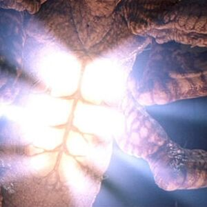 pennywise true form turtle  It (Creature)   Stephen King Wiki   Fandom