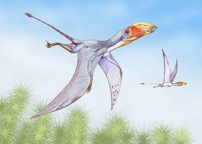 Dimorphodon2DB