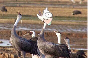 Bird.pearl
