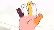 Cat Fingers (131)