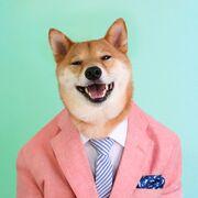 Dogge model!!!!