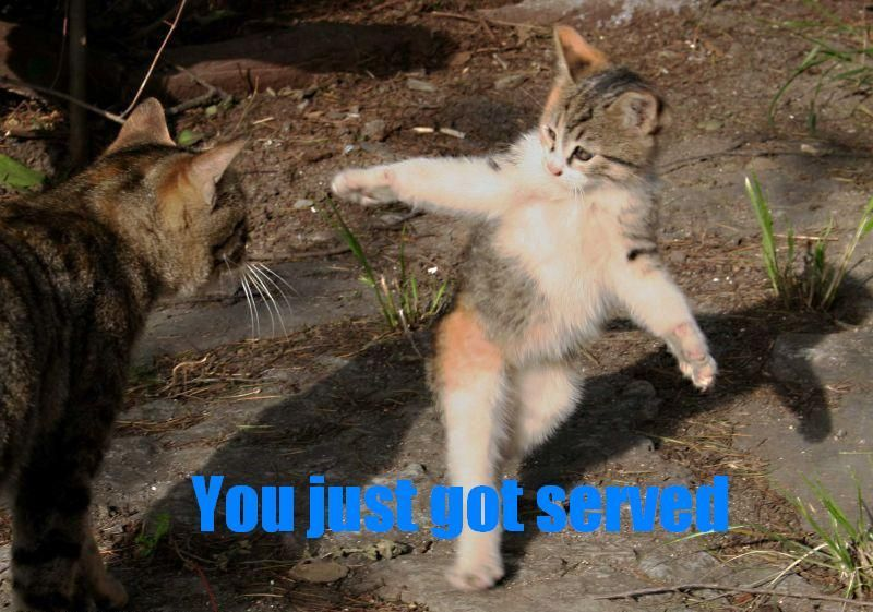 Funniest Cat Pictures  Jpg