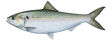 Image fish me up steven universe wiki for Nj saltwater fishing registry 2017