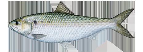 Marvelous File:Fish Me Up Insiiiiide.png