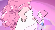 A Single Pale Rose Pregnant Rose