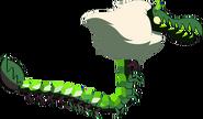 Centipoda-mae