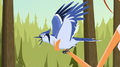 S1 E17 Emma taxidermied Blue jay for The Kahuna.png