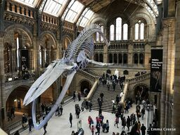 Things-to-do-in-London-Visit-the-Natural-History-Museum-Adventures-of-a-London-Kiwi-12