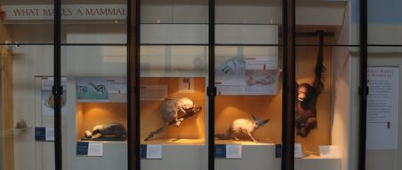 2560px-What Makes a Mammal, second cabinet, Mammals Gallery, Natural History Museum, London