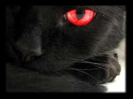 The Black Cat red