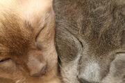 Cats by charlottethomas