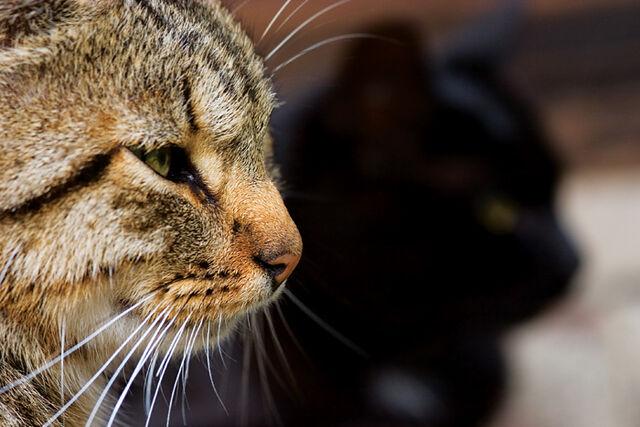 File:Cats by mindsunniti.jpg