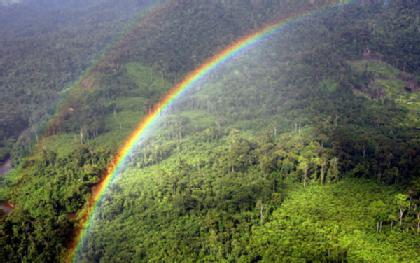 File:Borneo-Jungle-420x0.jpg