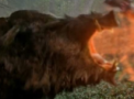 Portal Gorgon