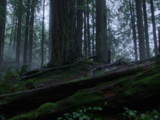 Storybrooke Wilderness Park