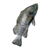 Rockfish Icon
