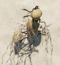 KartoffelNeu