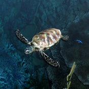 Seaturtle Icon