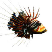 Lionfish Icon
