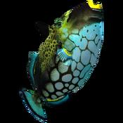 ClownTriggerfish Icon