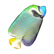 Angelfish Icon