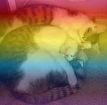 RAINBOW KITTIES