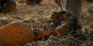 Pumpkin rot