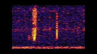 The Bloop- A Mysterious Sound from the Deep Ocean - NOAA SOSUS