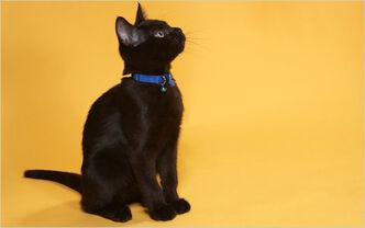 14obcats-span-blogSpan