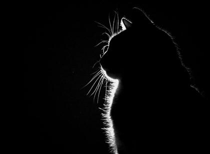 File:Cats silhouette sitting 1280x942 wallpaper www.animalhi.com 70.jpg