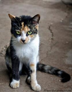 The cat by phoenix gurl-d48aomc