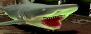 Shark-c